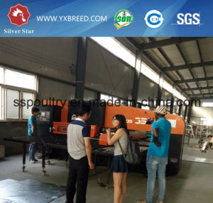Automatic H Frame Galvanized Steel High-Top Layer Chicken Poultry Farms Equipment pictures & photos