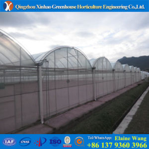 Plastic Cover Greenhouse with Hydrosponic System for Flowers pictures & photos