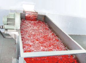 Fruit and Vegetable Brush Washing and Peeling Machine pictures & photos