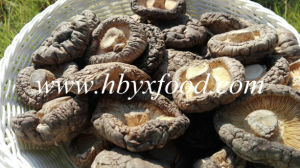 Grade a Natural Dried Shiitake Mushroom pictures & photos
