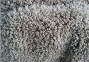 Shearing Shu Velveteen