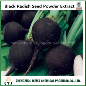 Natural China Origin Black Radish Seed Powder Extract pictures & photos