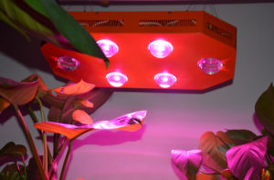 250W High Intensity and Full Spectrum LED Grow Light for Indoor Growing