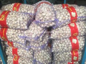 New Season Normal White Garlic pictures & photos