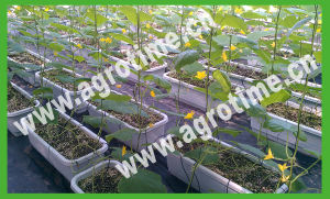 Hot Sale Greenhouse Hydroponic System for Tomato