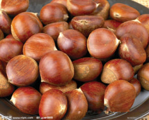 2017 Chinese Organic Fresh Chestnut pictures & photos