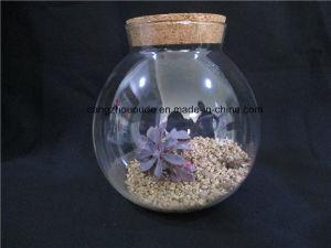 Mini Glass Vase Beautiful pictures & photos