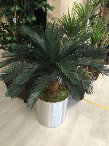 Artificial Plants of Cycas Gu-112130820 pictures & photos