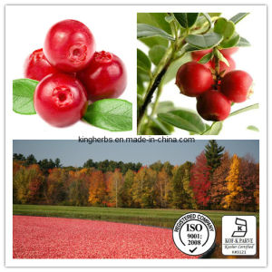 Hot Sale Cranberry Juice Extract Cranberry Extract Powder pictures & photos