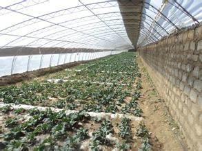 Factory Direct Sale Low Cost Polyethylene Film Greenhouse for Agricultural