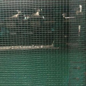 Vineyard Green Anti Hail Nets, Horticultural Fruit Protection Nets pictures & photos