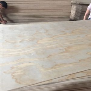 Radiate Pine Face Plywood Price for Furniture pictures & photos