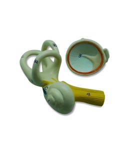 Medical Anatomical Plastic Inner Ear Model pictures & photos