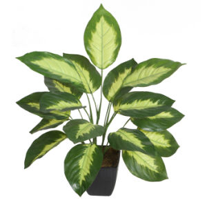 "Artificial Bonsai of Dieffenbachia Plant With4.5"" Plastic Pot, Evergreen Bonsai pictures & photos"