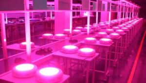 70-75W Gp LED Light for Plant Grow Indoor Grow Lamps pictures & photos