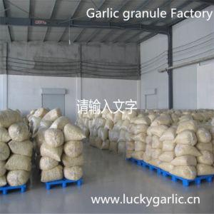 New Crop Fresh Garlic/ Garlic Dried Granule pictures & photos