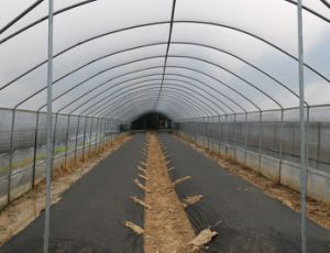Agriculture PP Nonwoven for Crop Protection pictures & photos