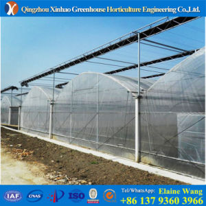 Promotion 2017 Hot Sale Commercial Plastwic Cover Hydrowponic Greenhouse for Pepper pictures & photos