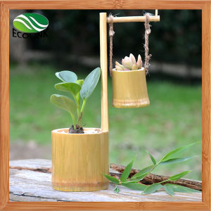 Creative Bamboo Flowerpot/ Succulent Plant Pot pictures & photos