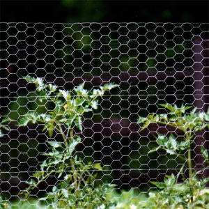 PVC Coated Surface Rabbit Cage Hexagonal Wire Mesh pictures & photos