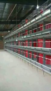 Chicken Cage System From Qingdao, China pictures & photos