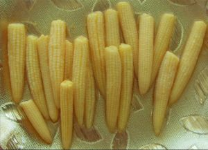 Super Quality Canned Baby Corn pictures & photos