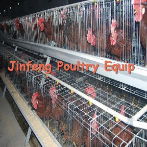 a Battery Frame Feeding Chicken System Poultry Equipment Cage for Farm pictures & photos