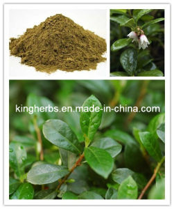 Fig Leaf Extract, Olive Leaf Extract, Bilberry Leaf Extract pictures & photos