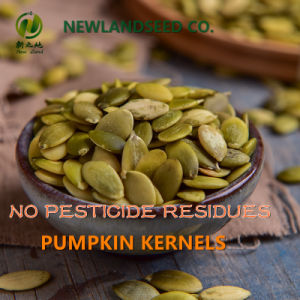 2016 Organic Shine Skin Pumpkin Kernel a to Europe pictures & photos