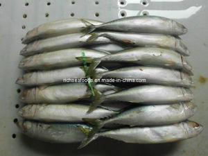 High Quality Big Sea Fish Chub Mackerel