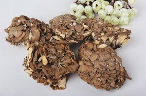Edible Fungus Yuewei Grifola Fondosa