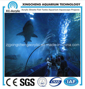 Large Aquarium Plexiglass for Sale pictures & photos