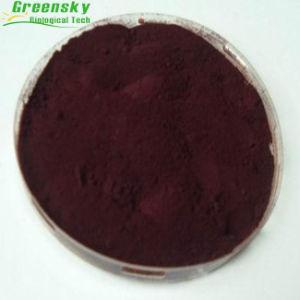 Pure Organtic Vaccinium Macrocarpon Extract pictures & photos