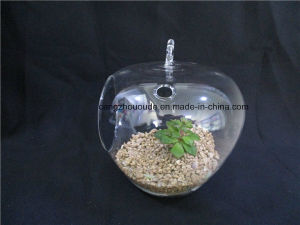 Transparent Color Plant Flower Decoration Glass Vase