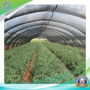 2 Needle Greenhouse Shade Nets for Agriculture pictures & photos