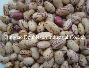 Light Speckled Kidney Beans Oval Shape