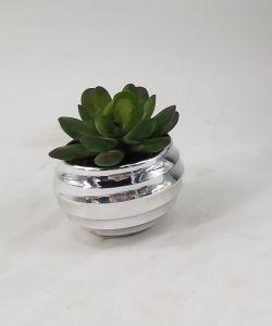 Popular Promotion Potted Plants Mini Succulent pictures & photos