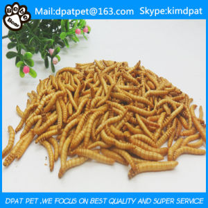 Wholesale Bulk Dried Mealworms for Pet Snacks Chicken Feed pictures & photos