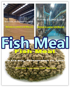 Fish Feed of Fish Meal (Protein 65%) pictures & photos