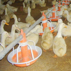 2016 Hot Sale Automatic Poultry Farm Equipment for Chicken House pictures & photos