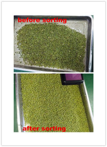 Color Sorter for Various Beans, Mung Bean, Soybean, Kidney, Sunflower Seed in MID East Area pictures & photos