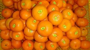 High Speed Orange Labeling Machine pictures & photos
