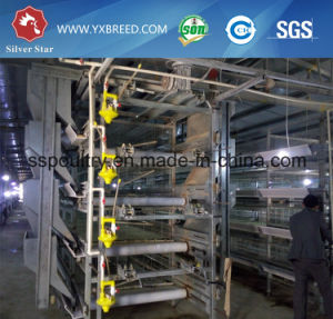 Automatic Galvanization Broiler Chicken Cage (H Type) pictures & photos