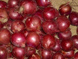 Fresh Onion pictures & photos