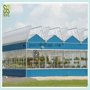 Gutter-Connected Multi Span Polycarbonate Sheet Greenhouse pictures & photos