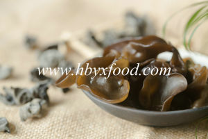 Black Fungus, Wood Ear, Mushroom pictures & photos