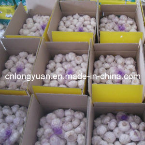 New Crop Chinese Fresh Normal White Garlic pictures & photos