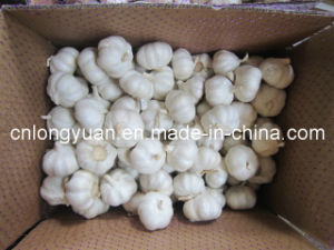 Top Quality Chinese Pure White Garlic pictures & photos