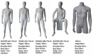 Fiberglass Male Upper Body Headless Mannequins pictures & photos
