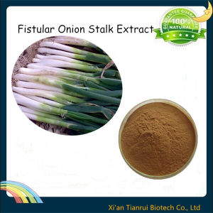 Fistular Onion Stalk Extract pictures & photos